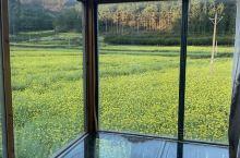 春暖花开…拥抱自然 看蓝天白云和金黄的油菜花 罗平金鸡峰丛是欣赏的最佳位置一定要去2次~2月或3月去