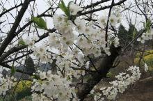 绵阳三台的春天