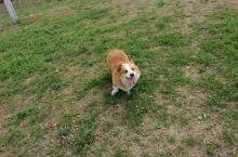 在泗洪抓拍到一直可爱的狗子