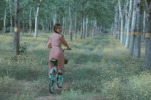 这里可以骑小黄车进来,现在满地的小黄花,拍一下森系的照片特别美。这里离奥体挺近的,我也是骑车环绕奥体