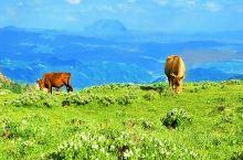 宁武马仑草原坐落于高山之颠,草原不同于内蒙古大草原,这里的牧草比内蒙古大草原的要高三五倍。与芦芽山遥