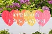 初夏, 约上三五好友, 乘着绿色的风, 去植物园撒欢。  虽说上海辰山植物园的最佳观赏期是春秋时节。