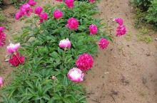 初夏的美好时光,花朵艳丽,芬芳遍野,假日好去处