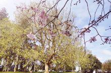 在春季如果去Cornwall Park ,可以得到花的洗礼哦,而且花香也很浓郁~
