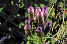 莫奈花园的花,也不知要多少园林工人才能招呼好这些宝贝?来此会增长了很多的花卉知识,同时会使心情舒畅忘