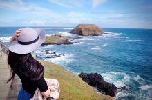 墨尔本菲利普岛,又叫企鹅岛,小岛不大,一天能逛完,但需要开车。晚上可以看企鹅归巢,很可爱,成群结队的