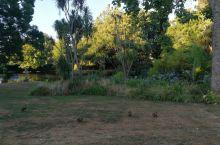怀卡托大学的草坪