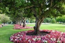 不记得是第几次来观赏布查特花园了,只要有国内的亲朋好友来加拿大温哥华,这里一定是必游之地。