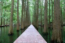 兴化.李中水上森林公园3 在李中水上森林公园漫步,看着这美丽的森林,真的是惬意无比,心情舒畅。