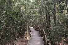 海南尖锋岭国家森林公园鸣凤谷原始森林奇观。