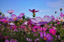 花海 送给每个打开相册的朋友,美花共赏