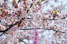 #无锡·鼋头渚#   樱花盛开的四月初,鼋头渚简直是美醉了,樱花树上都挂满了风铃风一吹叮铃铃的真好听