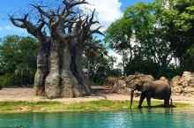 世界上最大的迪士尼公园,迪士尼动物王国  坐落在美国佛罗里达州的迪士尼动物王国是一个占地面积很广的迪