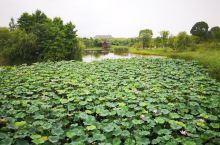 第一次来湘湖,天气虽然炎热,但是湖边好凉快,人很少