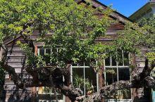 象牙色花园建筑-government house   维多利亚有很多值得一去的地方,但是因为去的时间