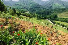 大秦岭 西安的后花园 这里有我们的美好记忆 这里是沈茂才院长精心主持 辛勤耕耘的 秦岭 国家植物园