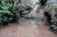 来武夷,不可能不去大红袍景区。其除了大红袍之母的坐阵,它本身就是个小小的生态园。