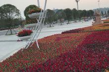 仪陇城市花团锦簇,盛迎国庆