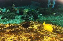 第一次尝试浮潜便是在水上探险乐园。感受不太好,没有协调好用嘴巴呼吸,于是,呛了几次海水,只进行了半程