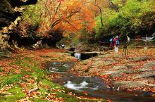 金秋时节,红叶如期而至 今年的秋天冷得有点早 此时正是层林尽染的好风光 黎坪景区漫山遍野的红叶 如火