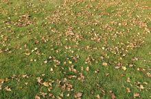 秋高气爽,银杏树叶正在变黄