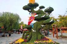 """中国开封菊花文化节""""前身为""""中国开封菊花花会"""",始于1983年,2013年升格为国家级节会,更名为"""""""