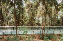 逍遥湖的滑水步道和玻璃桥。玻璃桥不高,但是从桥上看风景风景很美。