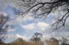 """""""山无头,水倒流""""右玉县两大奇观,风景的确不错,植被茂密,以沙棘果为主,转了一圈也没找到苍头河流,询"""