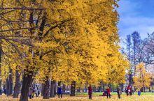 俄罗斯的秋季短暂而美丽,从9月初到10月,1个多月的时间,堪称是俄罗斯最浪漫的季节。层林尽染的秋色,