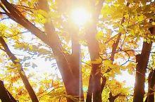 生命有裂缝,阳光才能照得进来。路上有坎坷,人才变得坚强起来