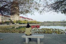 一进烟台大学西门,绿地、三元湖、钟楼真让人应接不暇,秋的风景别有韵致,竟有一朵海棠、多朵小月季开在枝