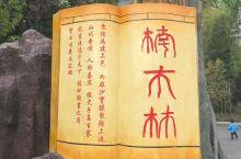麻沙镇楠木林景区,位于麻阳溪畔的江南村,古装剧的外景地