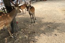 这里的小鹿好可爱