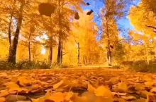 新疆胡杨林,摄影的天堂