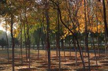 怀来·张家口 葡园,小公园不大却很美,每天都有老人孩子们来散步、玩耍。几张照片是秋天和几天前下雪拍照