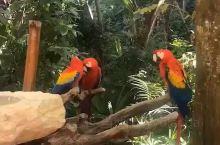 游客在坎昆x乐园捕捉到的鹦鹉,赤裸裸的撒狗粮,这样好么?!为右边的鹦鹉心痛…  本社专业提供墨西哥、