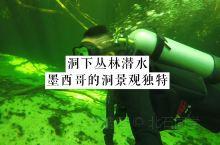 能想象在红树林下潜水吗?实拍墨西哥洞潜,看神秘的水下丛林! 墨西哥洞穴潜水,洞中世界奇妙无比,除了上