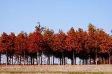 打卡地点: 东滩湿地公园  时节:12月中旬 【景点攻略】 详细地址: 崇明东滩东旺中路 交通攻略: