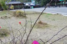 贵州大七孔植被一撇