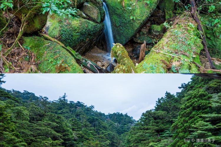 屋久杉自然館1