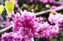 《来自郫州的诱惑:领略一下春天的气息……》  我是孤独浪子,希望我的拍拍让您有所收获。 漫游神州31