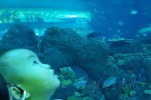 海滨城,超大鱼缸