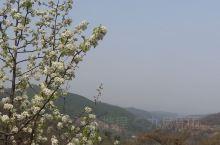 山中的春天,宁静中的绚烂。