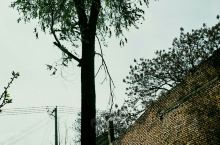 裁树春日暇趁雨转晴,庭前樱树霜花浓。西角甜柿初试水,北墙核桃苞欲擎;蜂待槐花清香 华阴·渭南  釆,