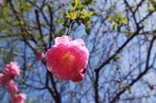 蓝天  绿叶  红花