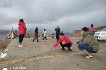 打卡西藏日土班公湖,傍晚大雨过后,海鸥挣食。日土我大唐阿里援藏对口县! 日土·阿里