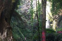 莫里瀑布据说又叫扎朵瀑布,位于芒市、陇川、瑞丽三县市结合部的莫里峡谷,藏于山峦叠翠、万木峥嵘、双峰对