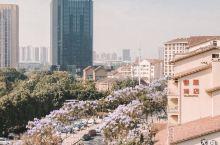 """重庆最美""""蓝花楹大道"""",迷失在初夏的紫色浪漫  重庆市区看蓝花楹的地方有好多,但像大学城这边几条街成"""