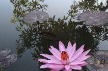 清晨沐浴在阳光下的安缦吉沃,安宁而美好,莲花盛开~绽放着微笑,行走山间,有风吹过