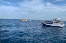 遇见斯里兰卡之海蓝时见鲸 九宫格体验一下,无法看到全身。这也许就是海洋的神秘魅力吧!